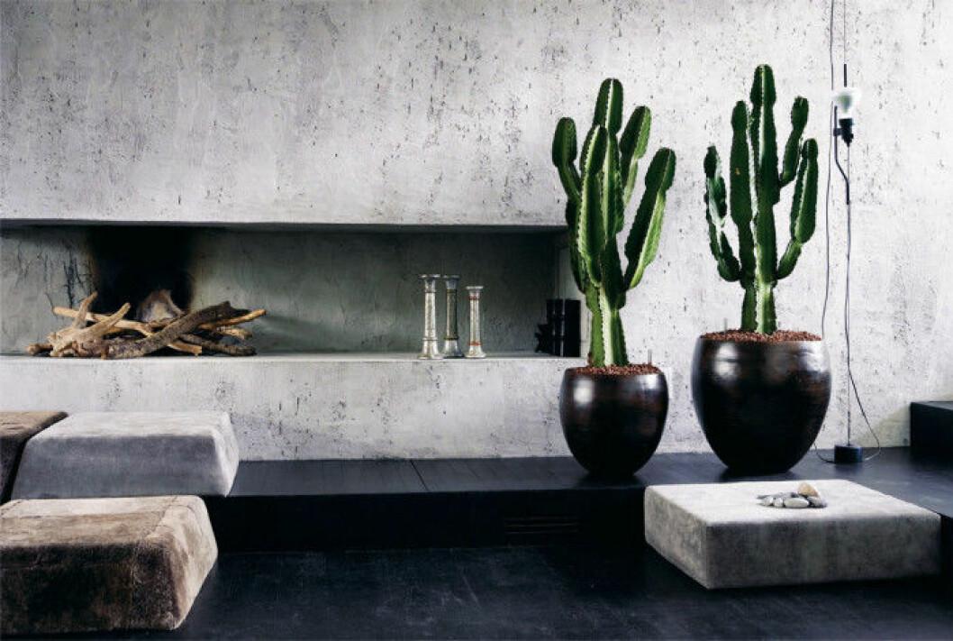 07. high-chaparall-kaktus-cowboy-kaktus-euphorbia