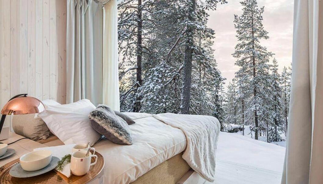 Arctic Treehouse Hotel är en unik, naturnära hotellupplevelse