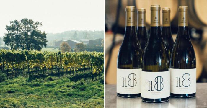 vingård och flaskor