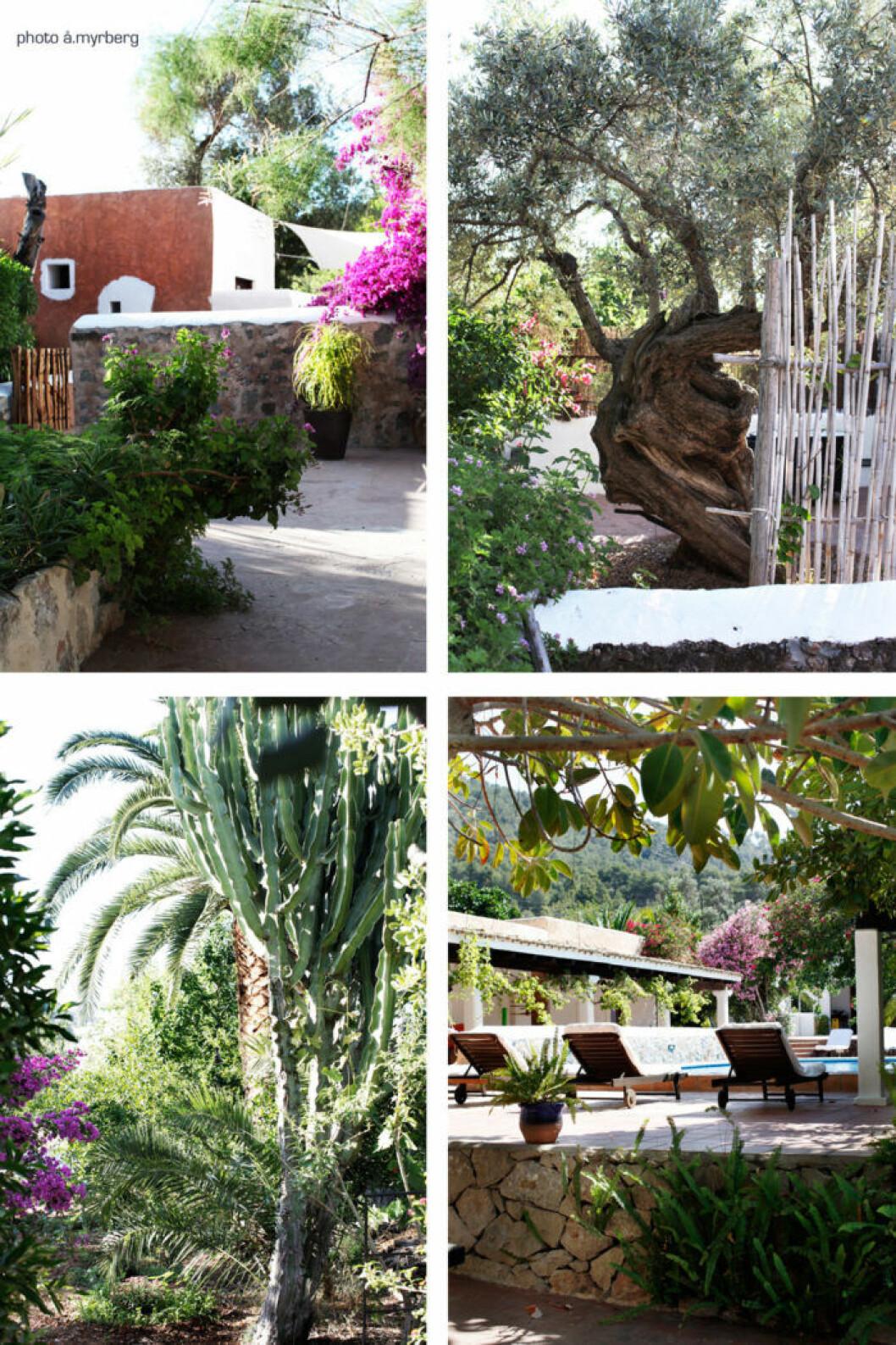 Vi vill åka till Ibiza och bo på Agroturismo Can Pere Sord efter att ha läst Åsa Myrbergs resetips.