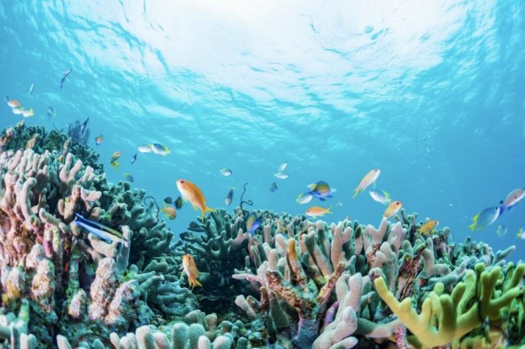 turkost vatten med massa fiskar och rev