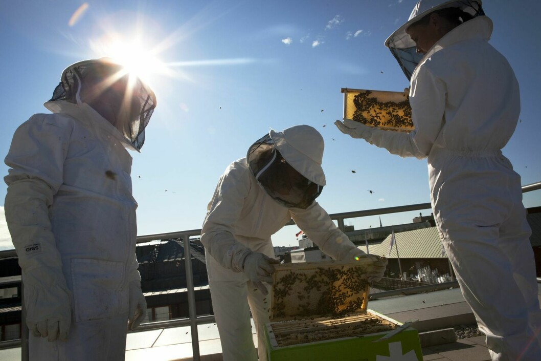 Karolina Lisslö & Josefina Oddsberg är biodlare och grundarna av Bee Urban. Dom hoppas kunna sprida kunskap om binas betydelse för människan.