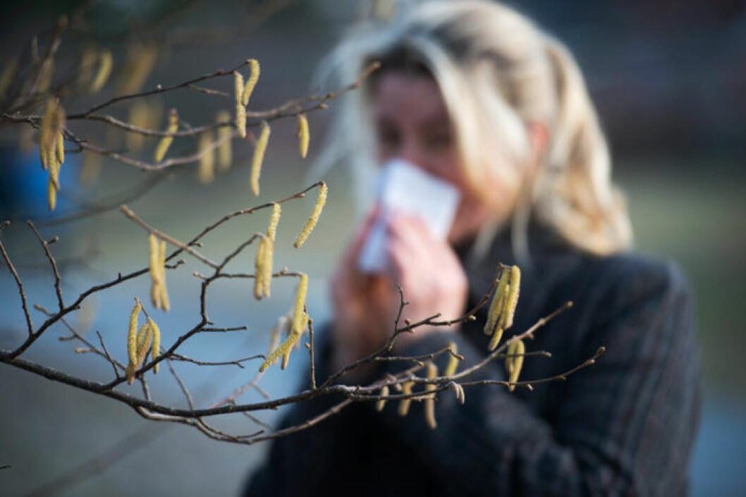 Pollensäsong, Sverige