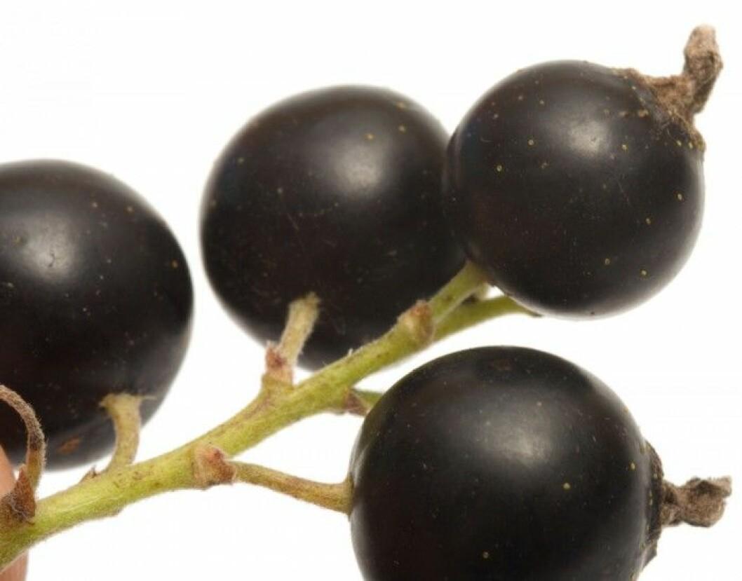 Vinbär. Vinbär är riktiga hälsobär som smakar gott och är rika på C-vitamin och antioxidanter. Den lila eller mörkröda nyansen är särskilt bra för ögonen och hjärnan och kan förebygga hjärt- och kärlsjukdomar. Men de innehåller också kalium som är bra mot högt blodtryck.