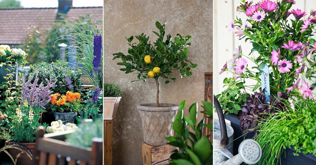 Blommor för solig balkong
