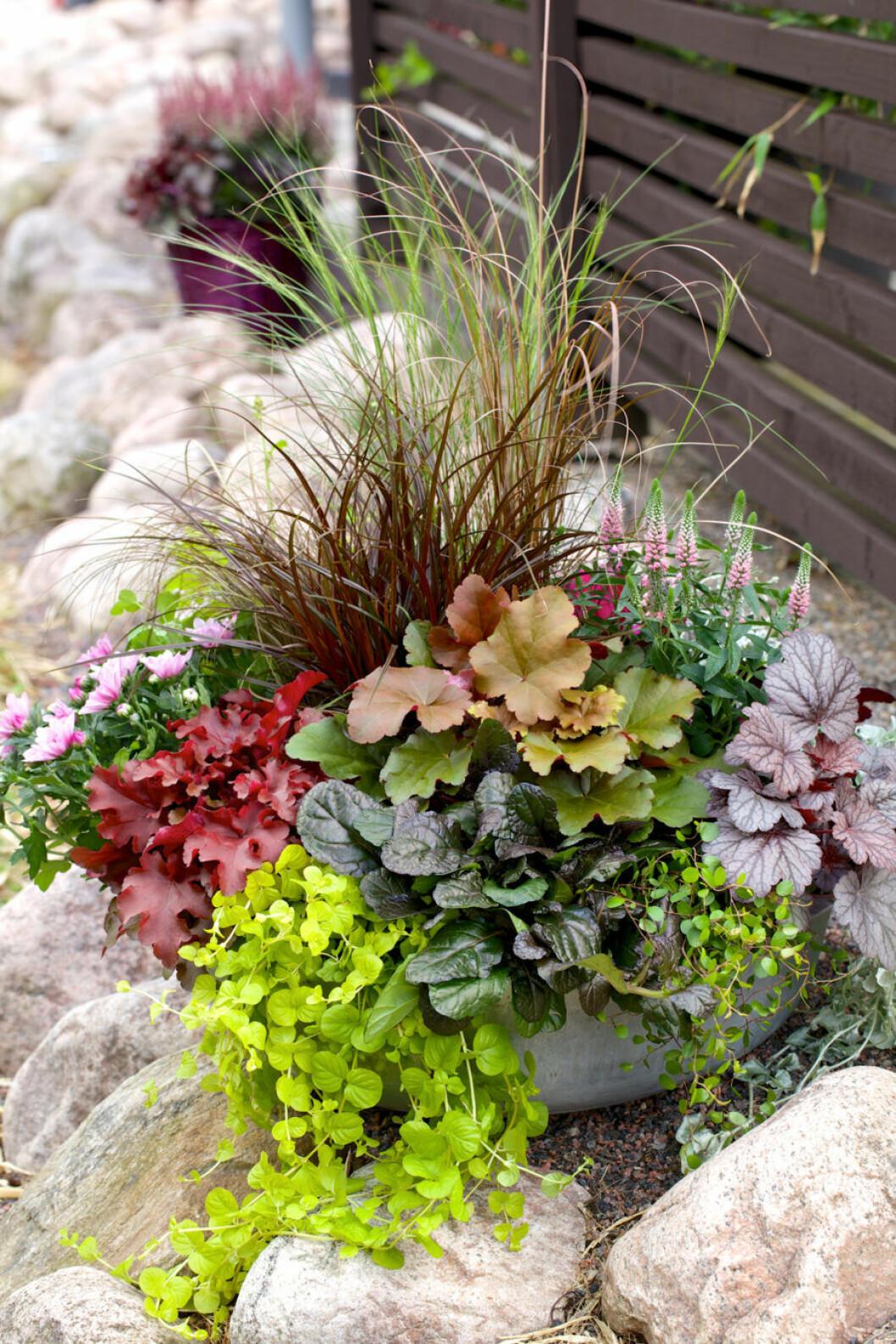 Plantering Blomsterlandet