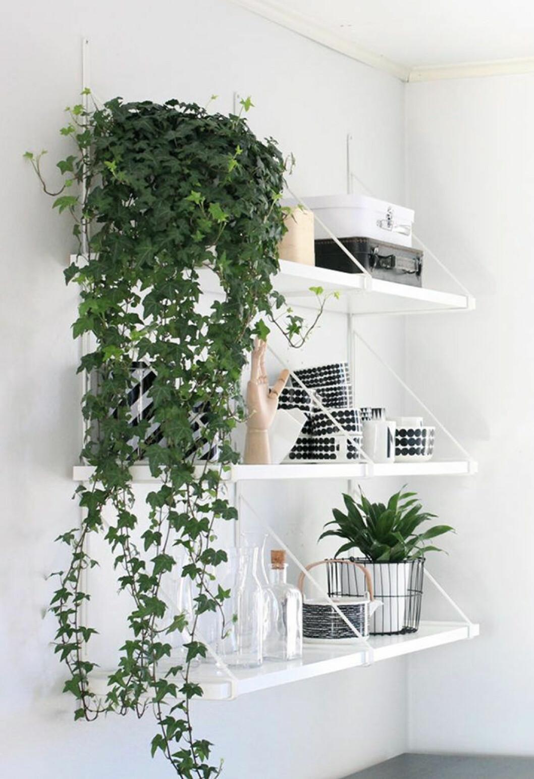 Inred med växter på liten yta med smarta compact living-knep