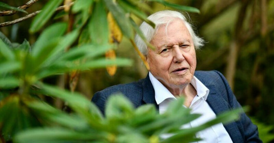 David Attenborough I Netflix nya serie Our Planet