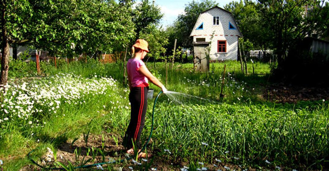 tjej som vattnar sin trädgård