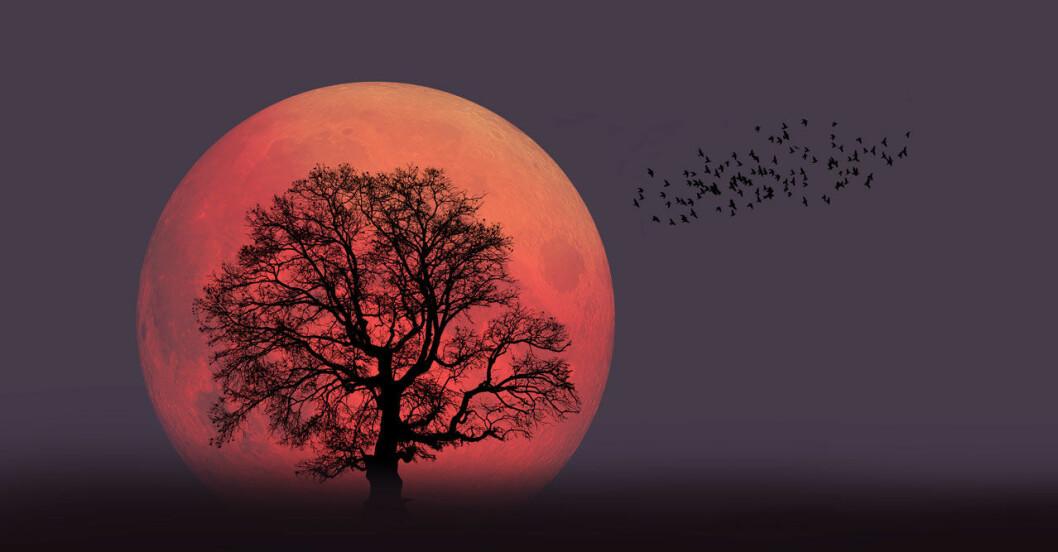 Hur mycket påverkas vi människor av fullmånen?