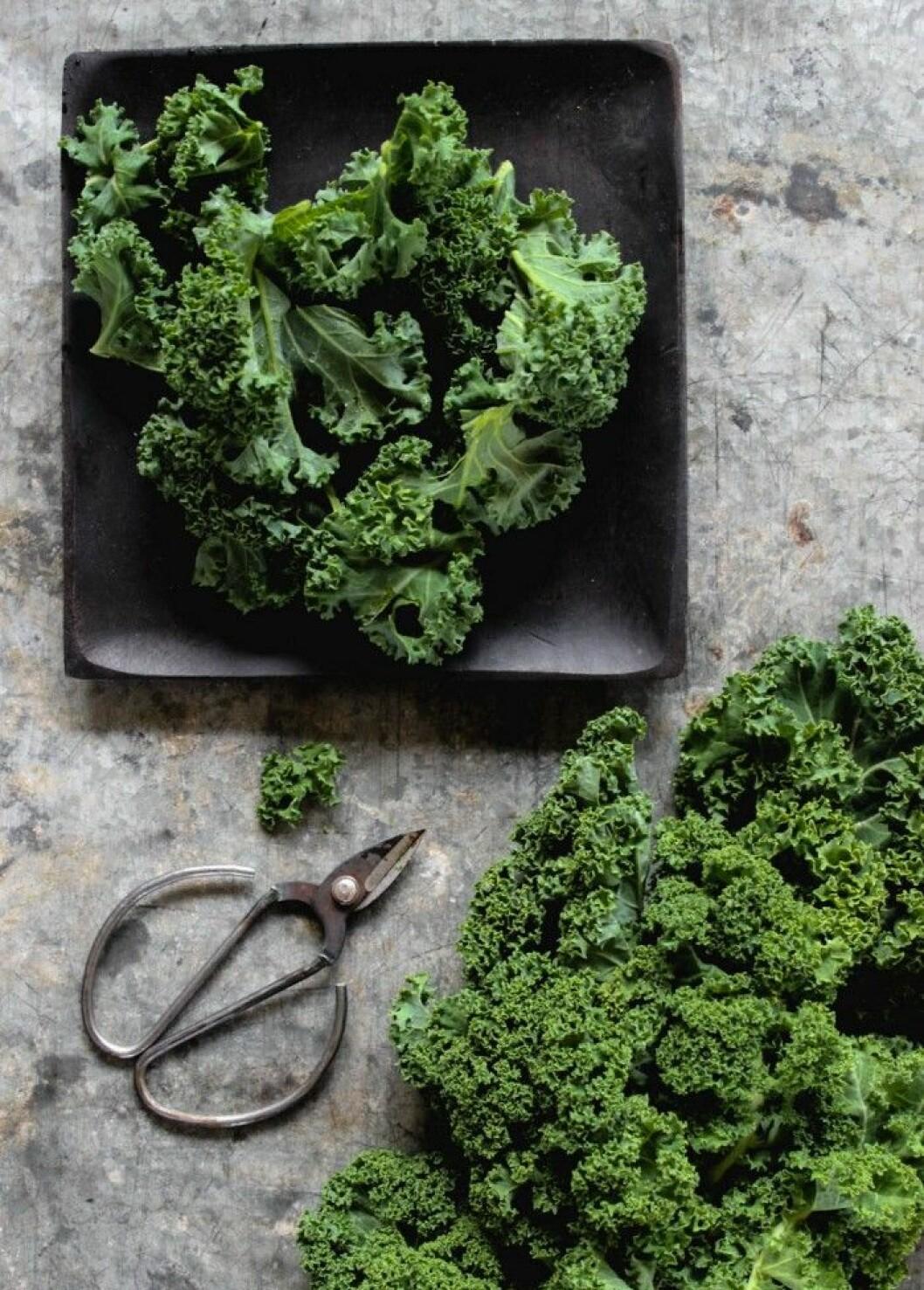 Grönkål. Middagstips! Lax med grönkål.
