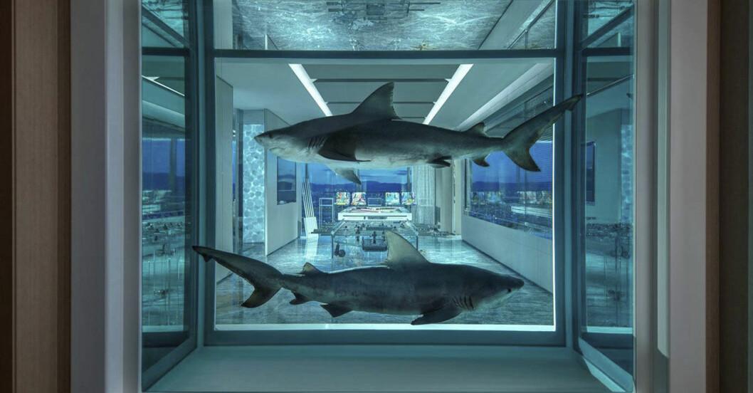 Ett verk av Damien Hirst med två konserverade hajar