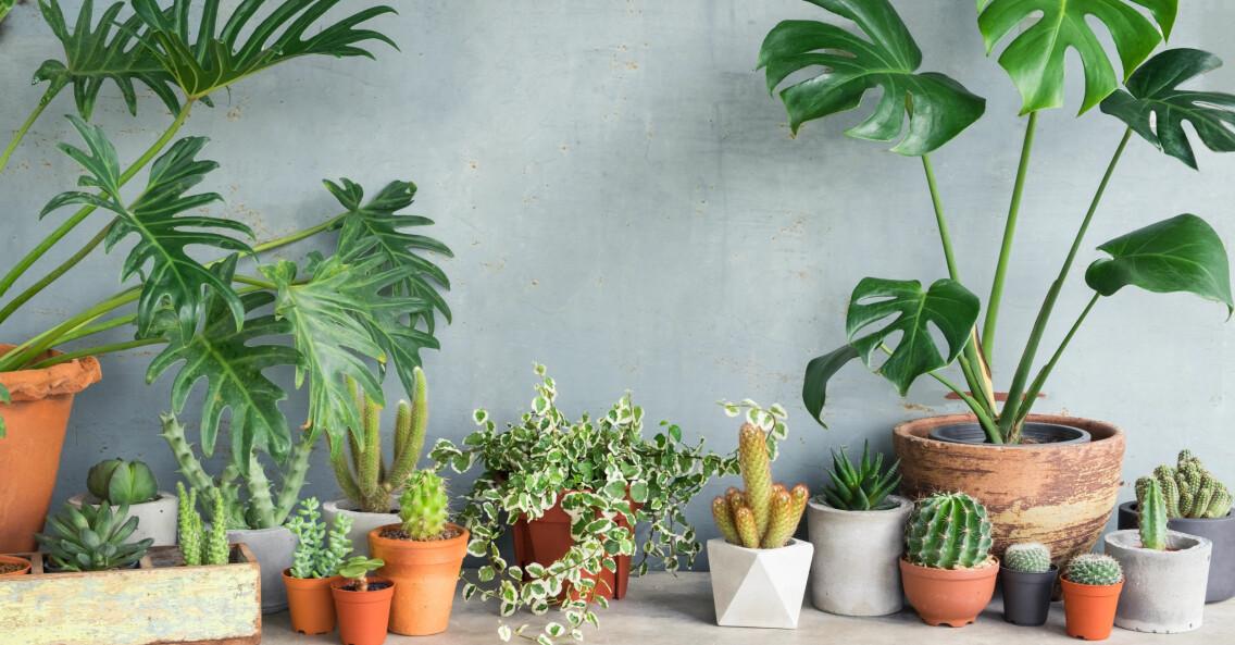 Olika typer av krukväxter