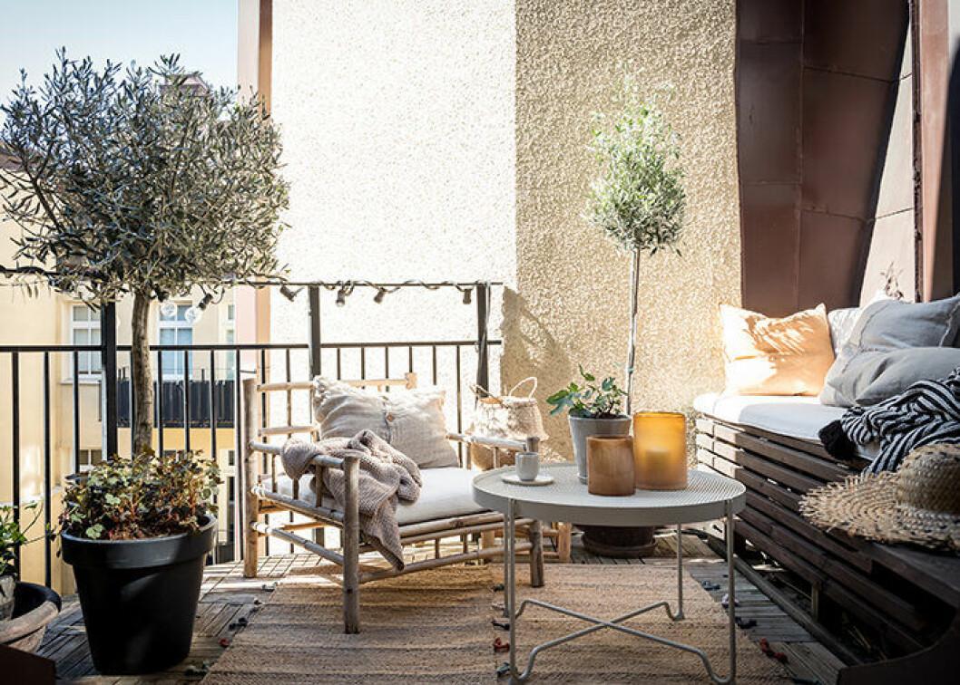 Lyxskandinavisk balkong med olivträd