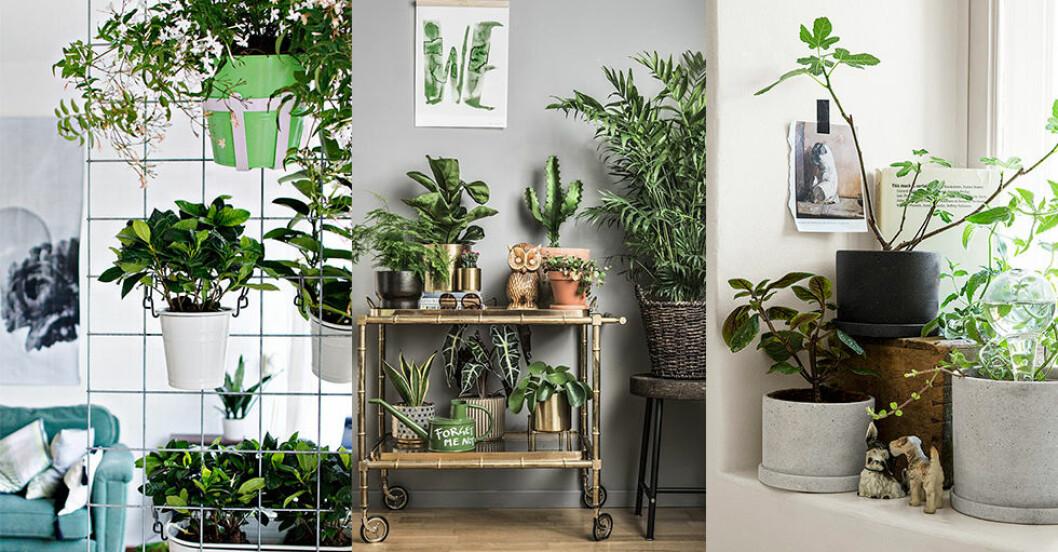 Få plats med krukväxter
