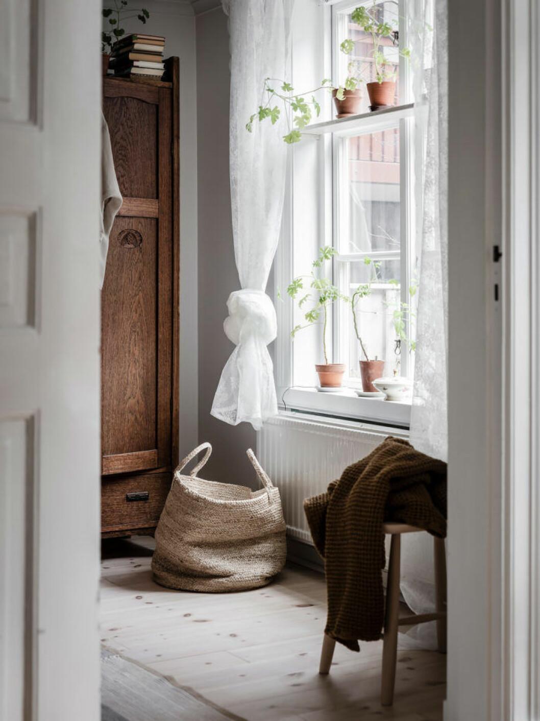 Växthylla i fönstret