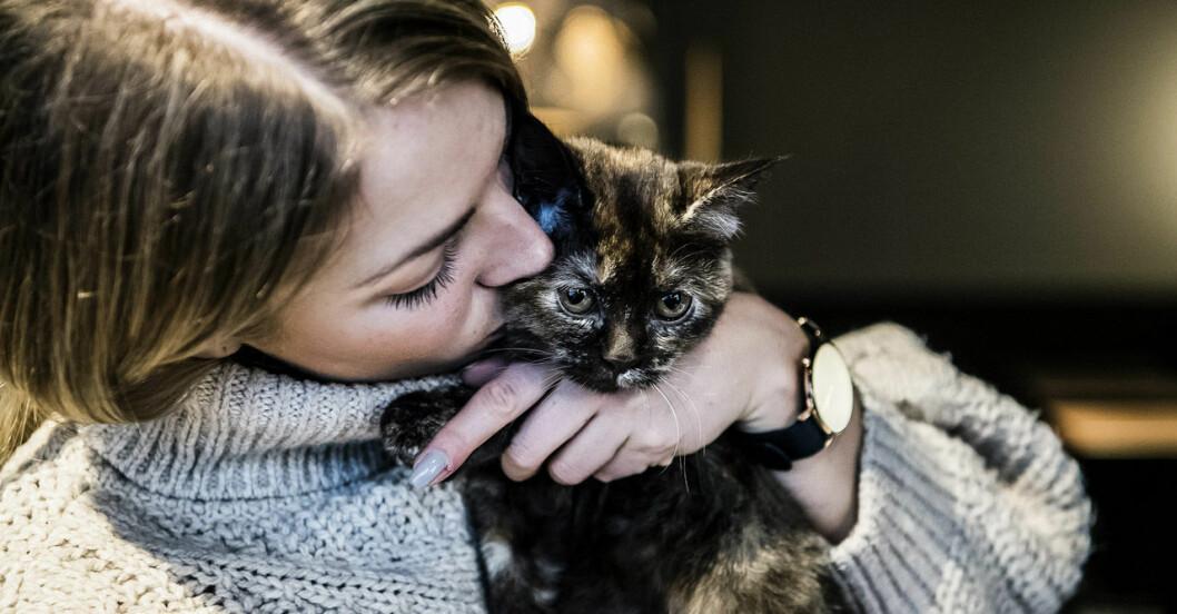 Elina Thorsell gosar med en katt på Sveriges första kattkafé Java Whiskers