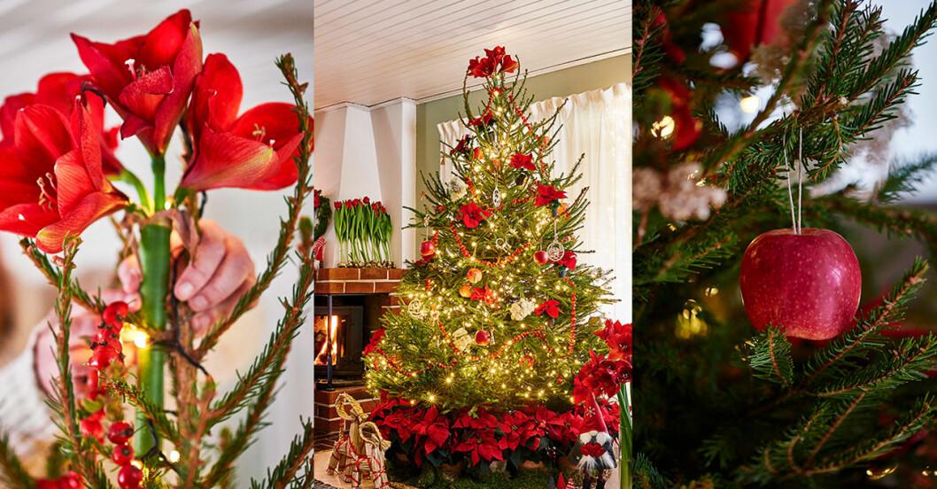 Traditionella julgranspynt, amaryllis och äpple