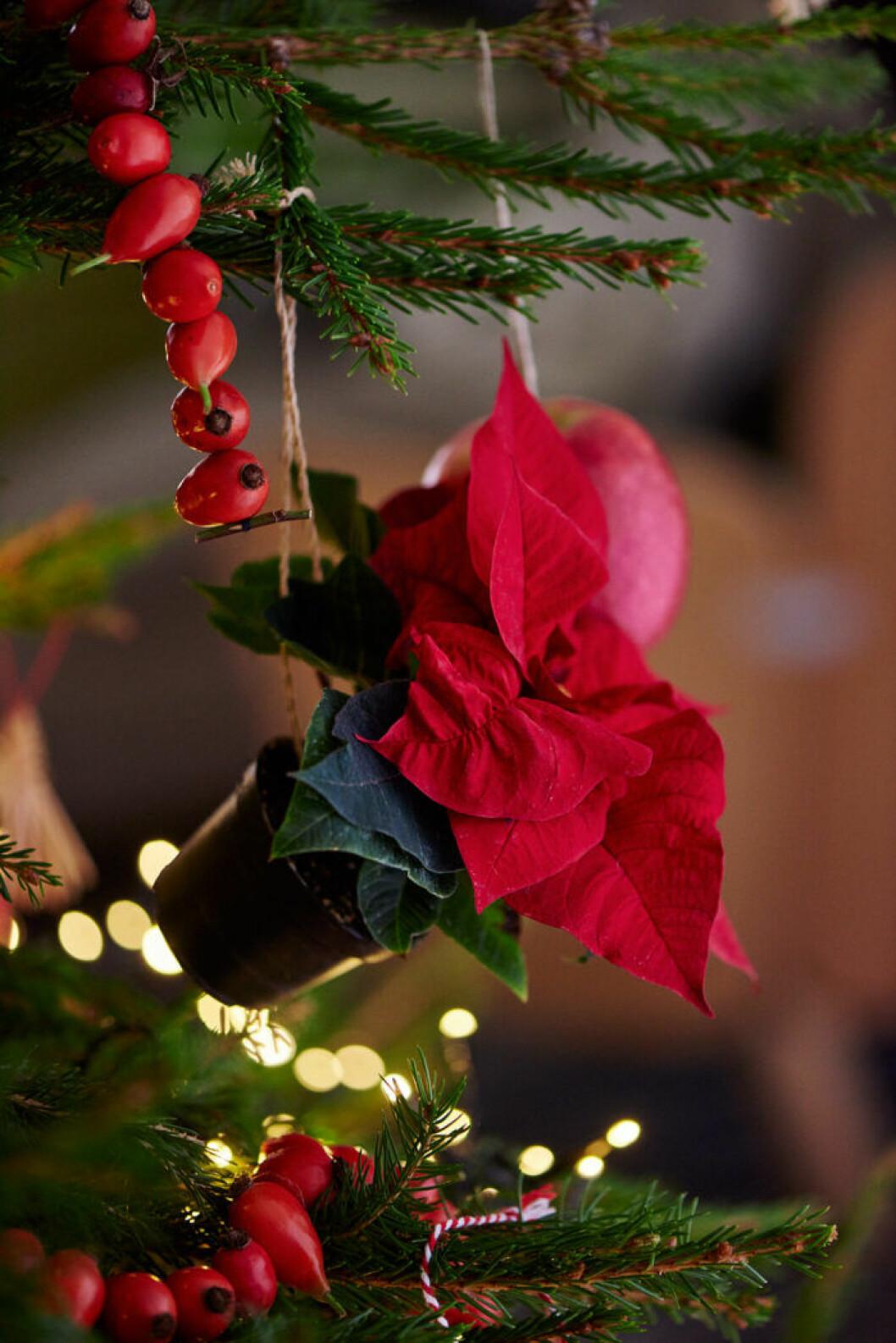 minijulstjärna i julgranen
