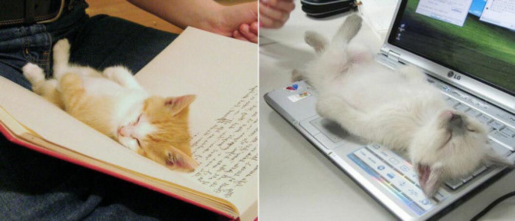 katt-bok-dator