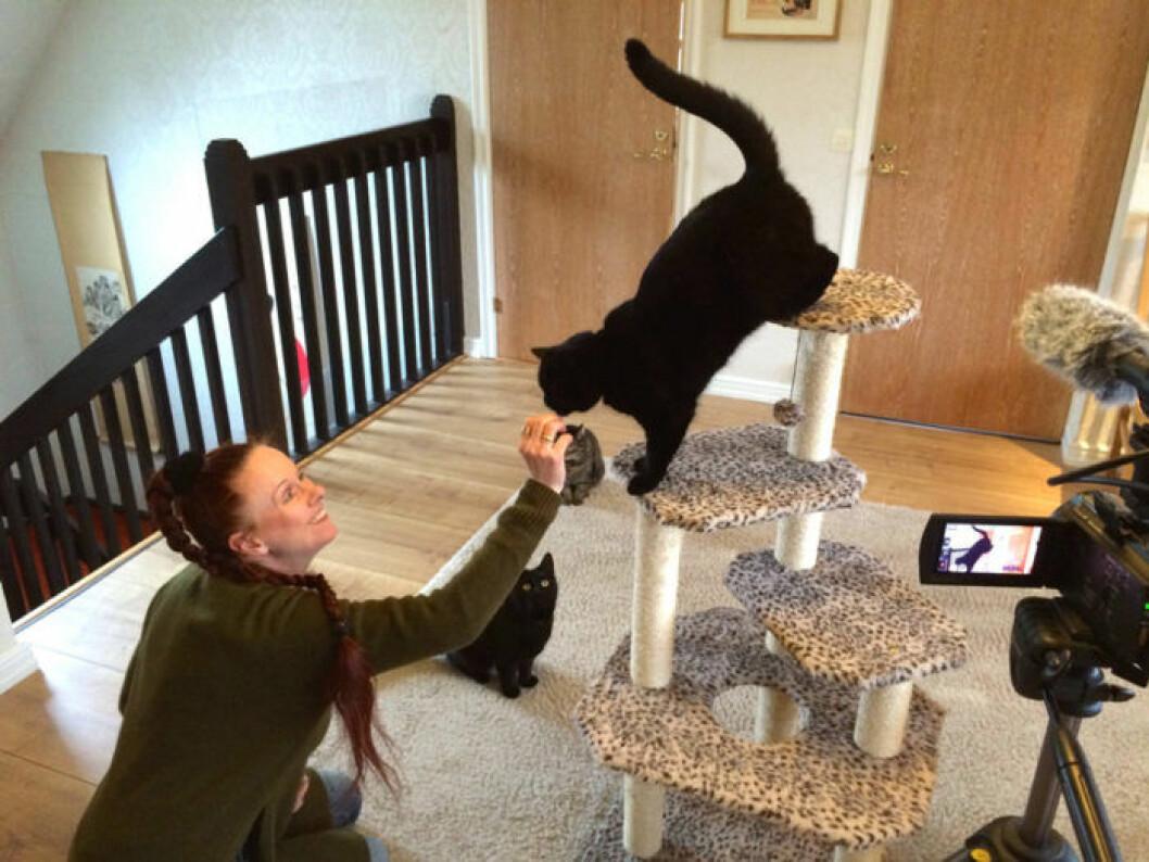Forskare kartlägger katternas språk