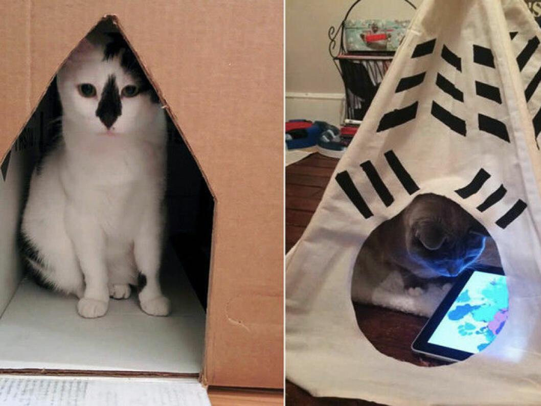 katt-teknik