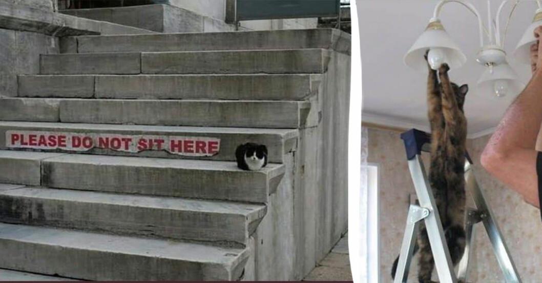 Katter som är där de inte ska.