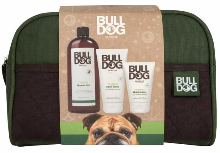 kit bulldog