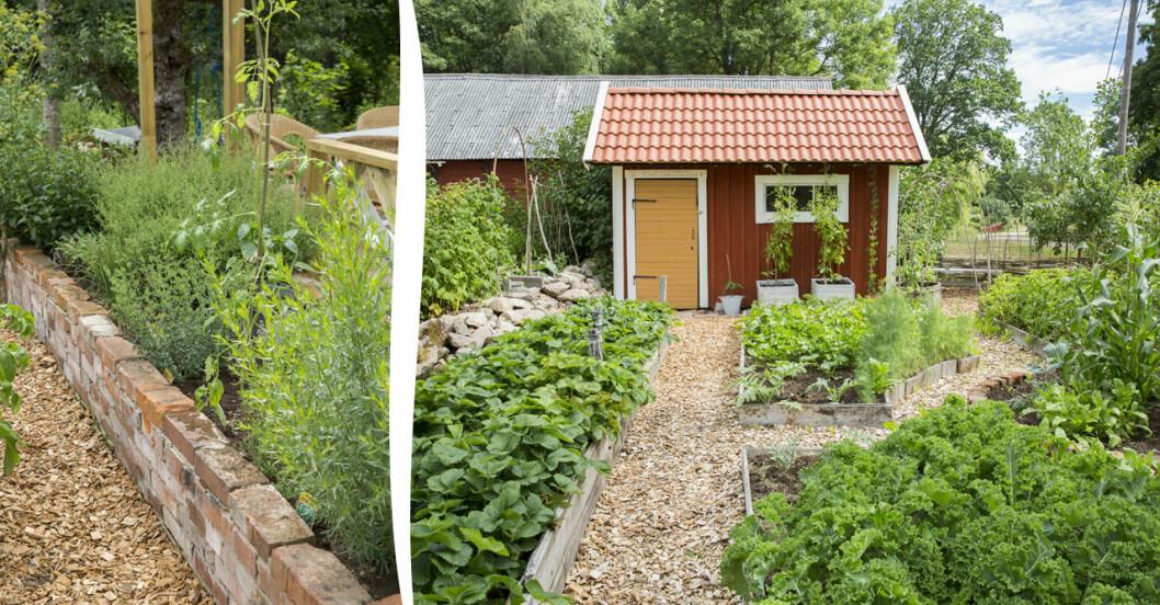 Så skapar du en egen köksträdgård