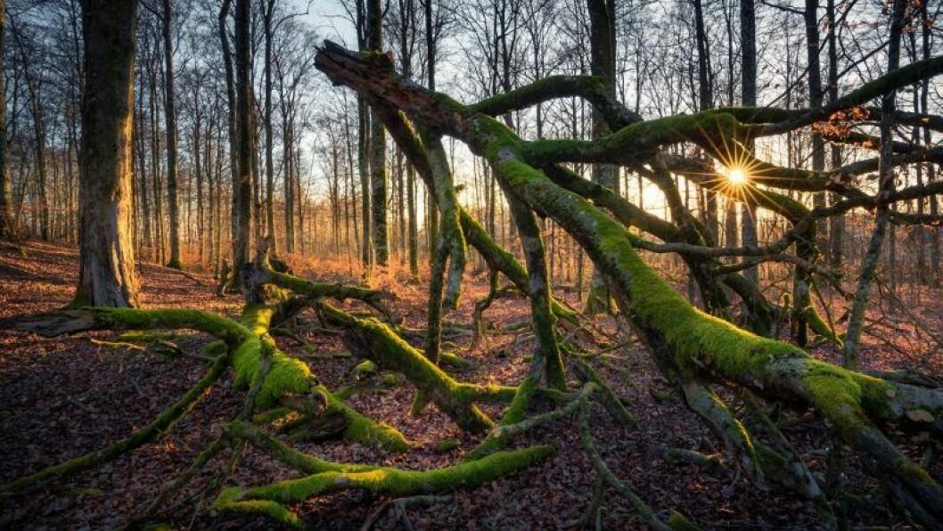 Naturen i Kvänsås