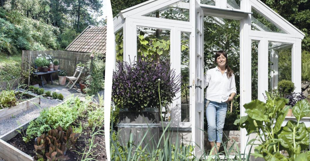 Lena och Peter Wallins inspirerande växthus