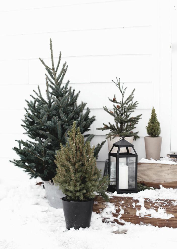 minimalistiskt julpynt till uteplats och trädgård