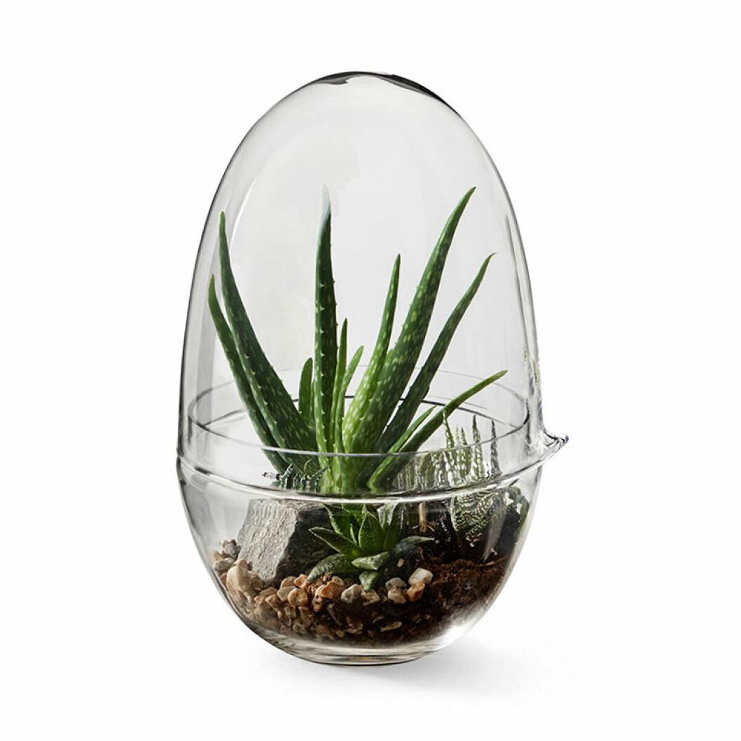 miniväxthus i glas