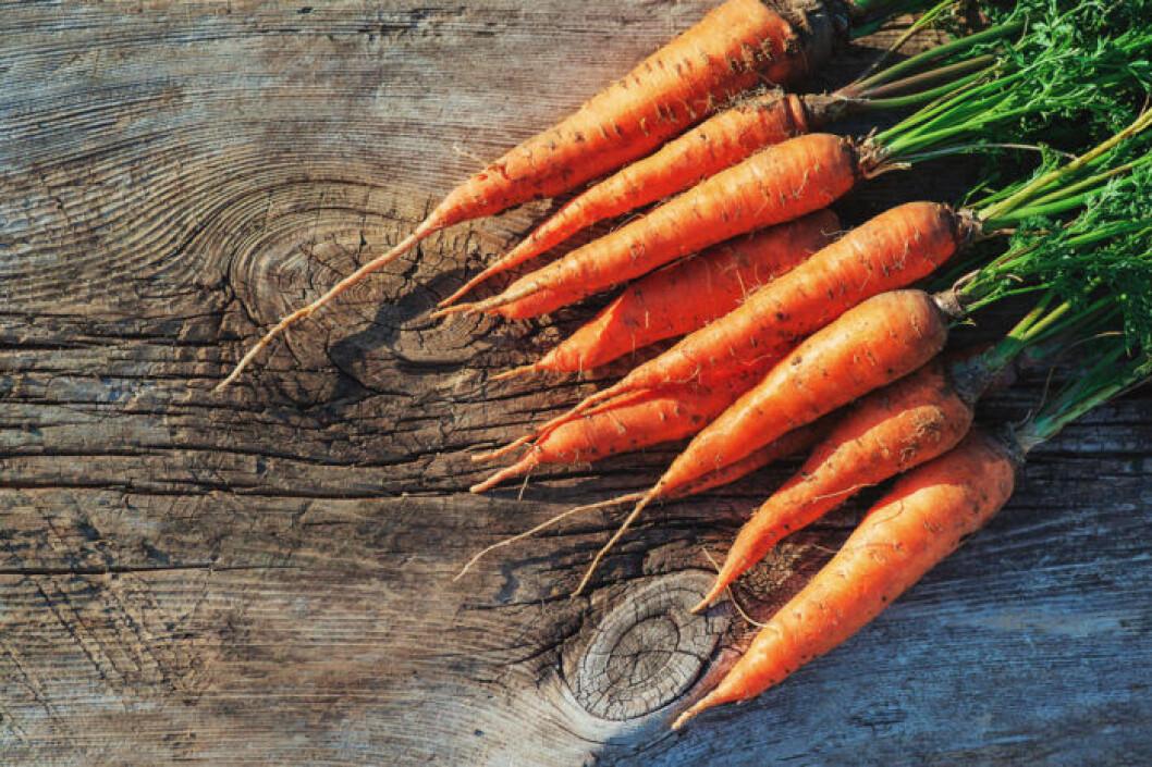 Morötter kan du äta både råa och tillagade.
