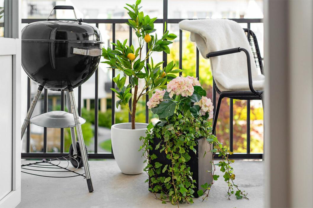 Balkong med citrusträd och grill
