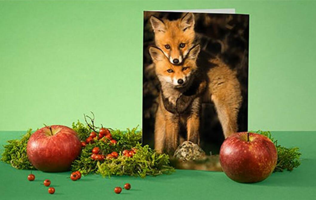 En bild på ett gåvokort från Naturskyddsföreningen, som hjälper att skydda svensk djur och natur.