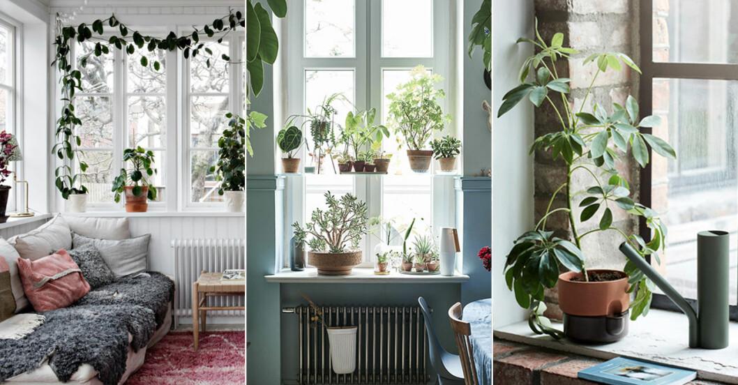 Tips och knep när du tar hem en ny växt
