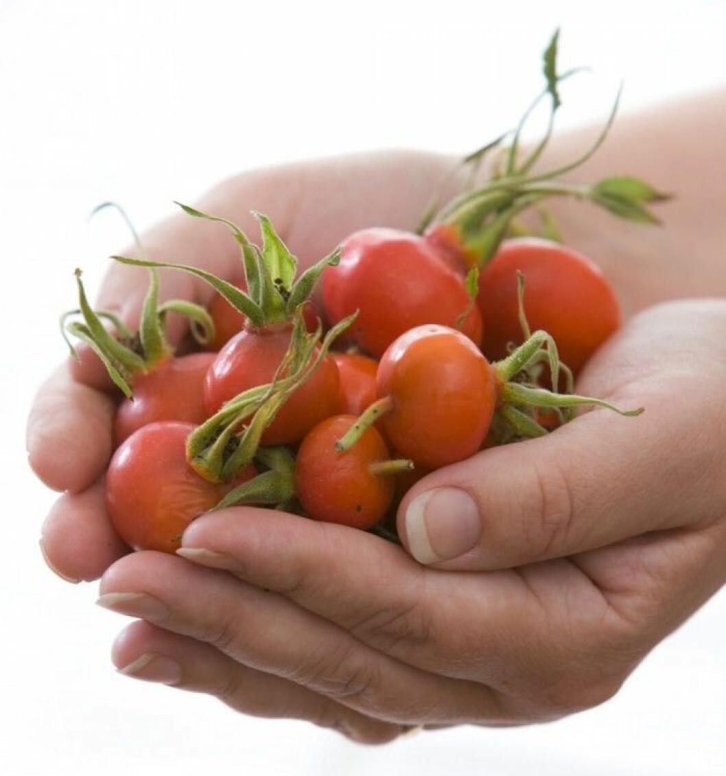 Nypon. Nyponet innehåller mest C-vitamin av alla frukter och bär. 100 gram nypon bär på lika mycket C-vitamin som ett kilo citroner. Nypon ger näring och energi åt kollagenet i hud och bindväv, men stärker också immunförsvaret. Bäret används även mot ledvärk och inflammation, eftersom det innehåller ett nyttigt fettsyreämne som kallas gopo, galactolipid.