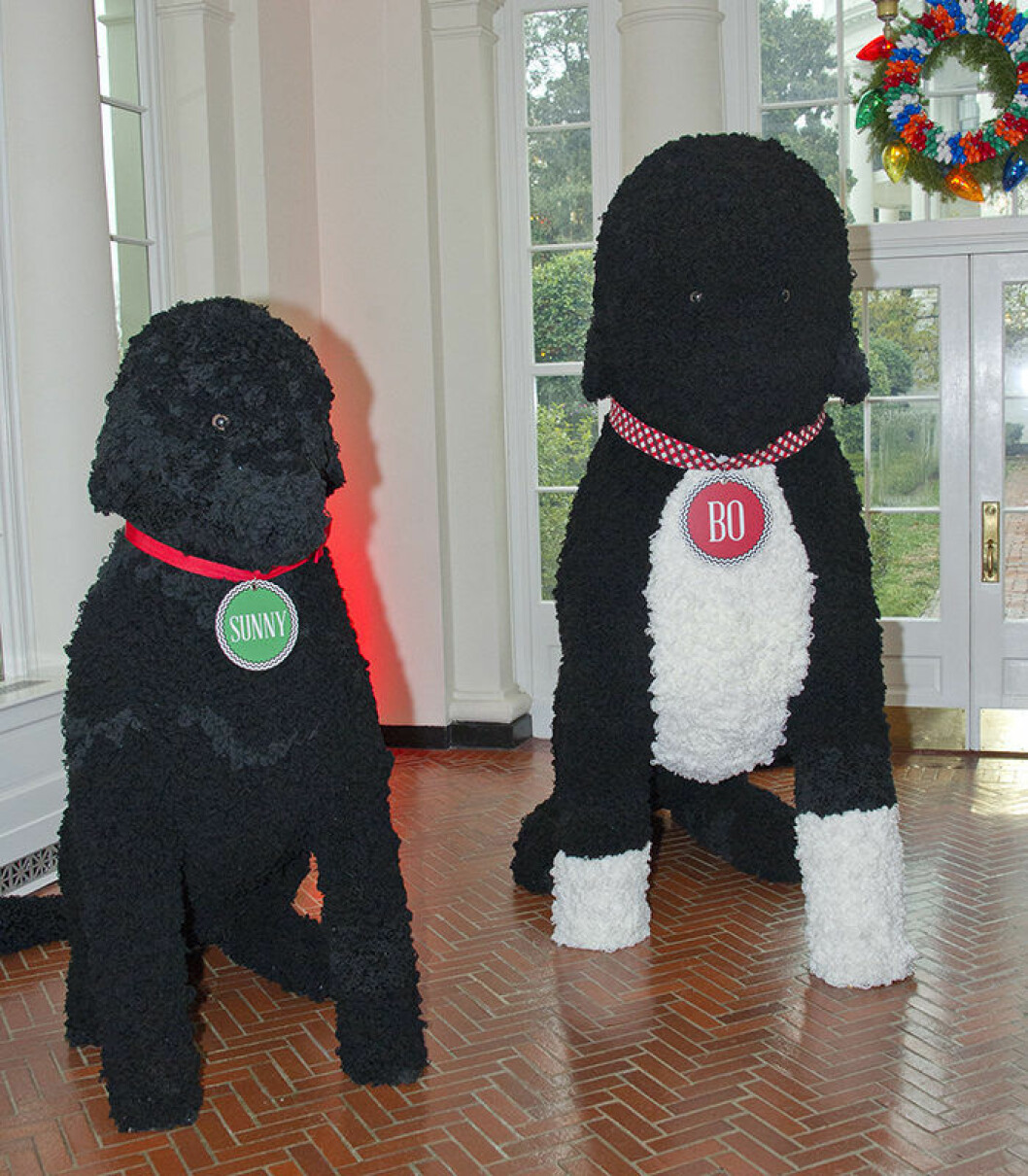 "The 2016 White House Christmas decorations are previewed for the press at the White House in Washington, DC on Tuesday, November 29, 2016. Pictured are larger than life replicas of the Obama dogs Sunny and Bo, made of 25,000 yarn pom-poms. The first lady's office released the following statement to describe those decorations, ""This year?s holiday theme, 'The Gift of the Holidays,' reflects on not only the joy of giving and receiving, but also the true gifts of life, such as service, friends and family, education, and good health, as we celebrate the holiday season."" Credit: Ron Sachs / CNP /insight media"