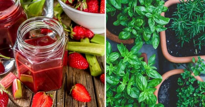 jordgubbar, rabarber och kryddor