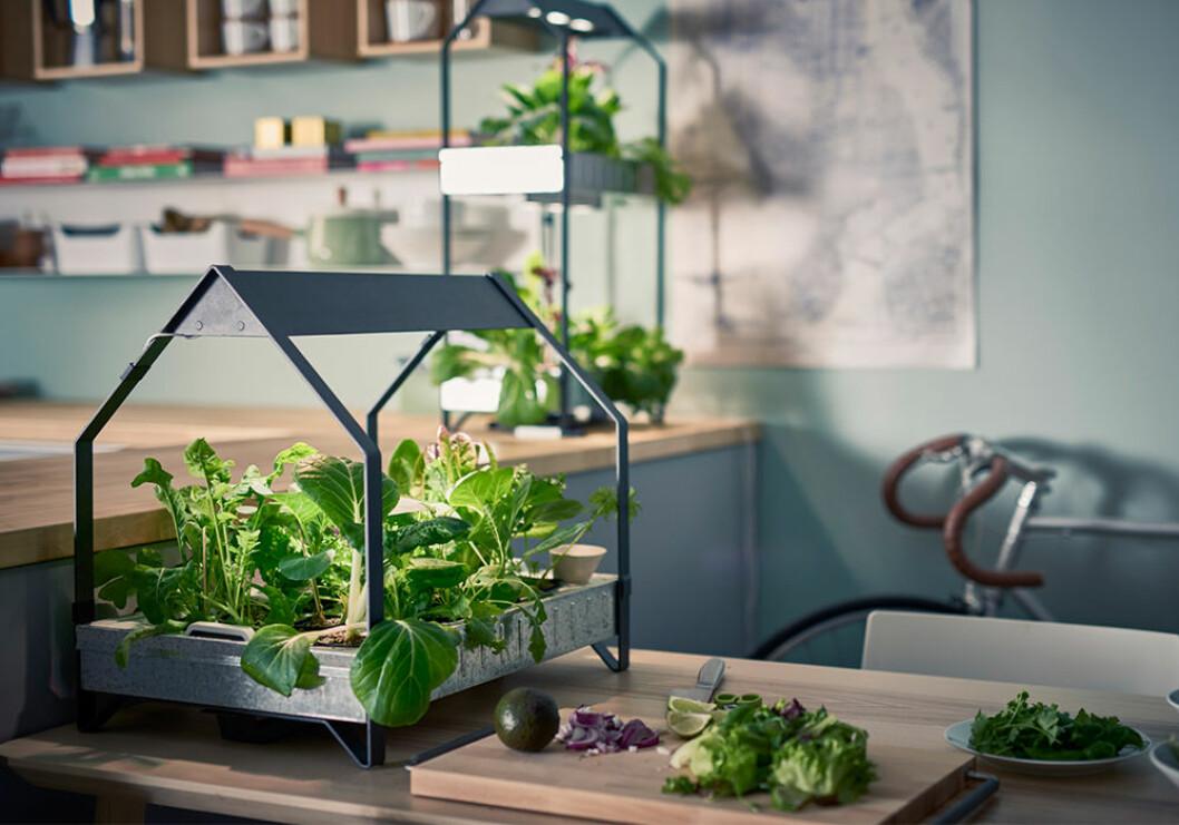 Ikeas Krydda hjälper dig att odla hemma