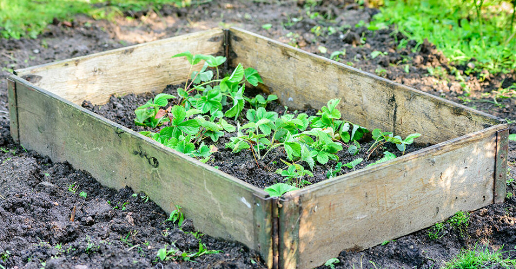 hur odlar man i pallkrage