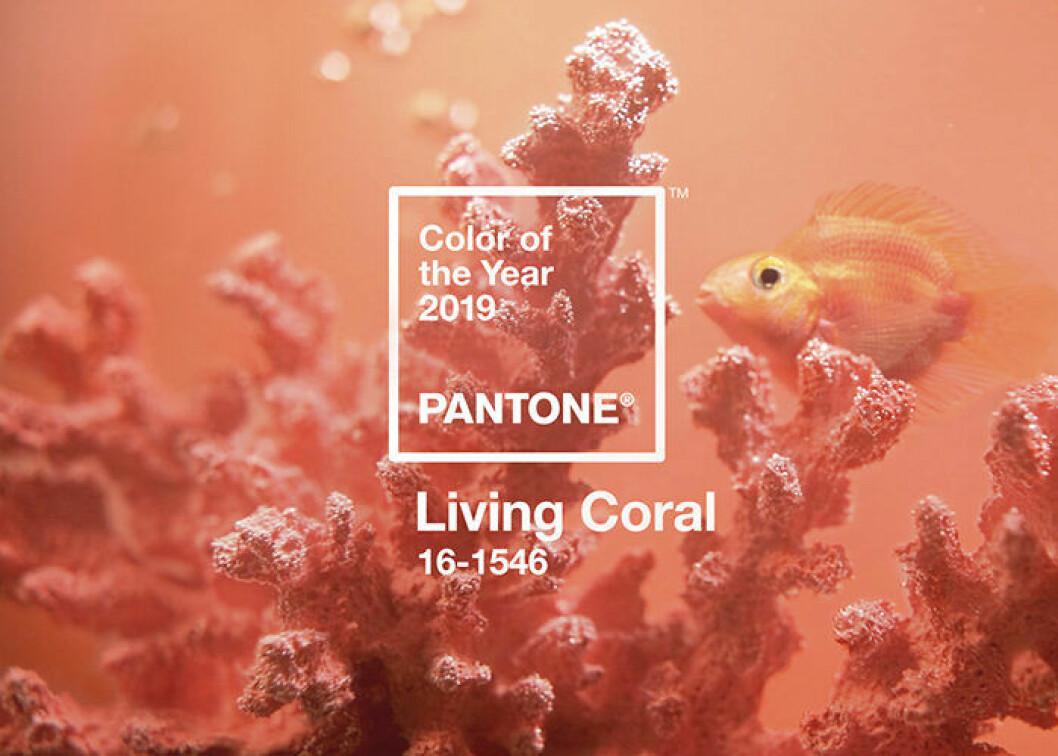 Living Coral är årets färg av Pantone 2019
