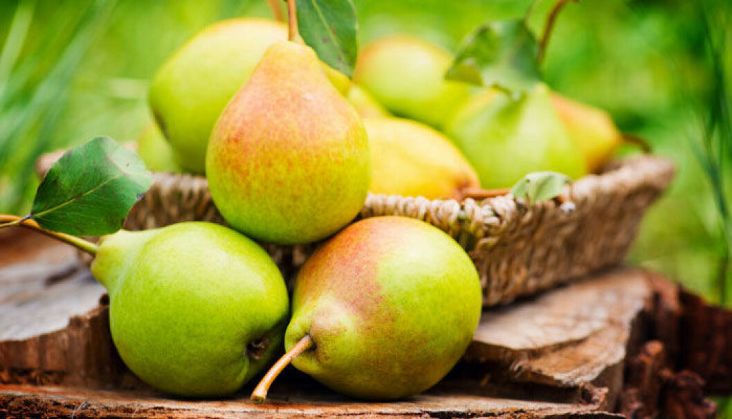 pear-paron