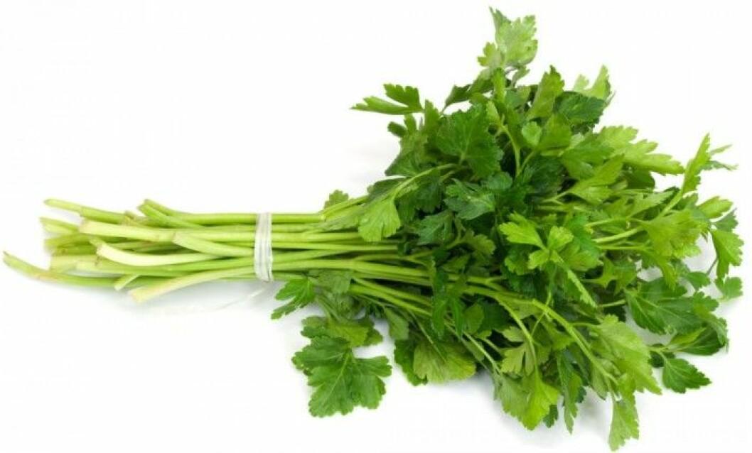 Persilja. Persilja är en av våra äldsta växter, och har ansetts kunna ge både styrka, snabba reflexer och slughet, samt kunna bota baksmälla. Persilja är, precis som moroten, mycket rik på karoten. Fem gram persilja täcker faktiskt vårt dagsbehov av A-vitamin!  Persiljeroten är en av fem rötter som bäst stimulerar aptiten. Den är också urindrivande och bra för ämnesomsättningen.