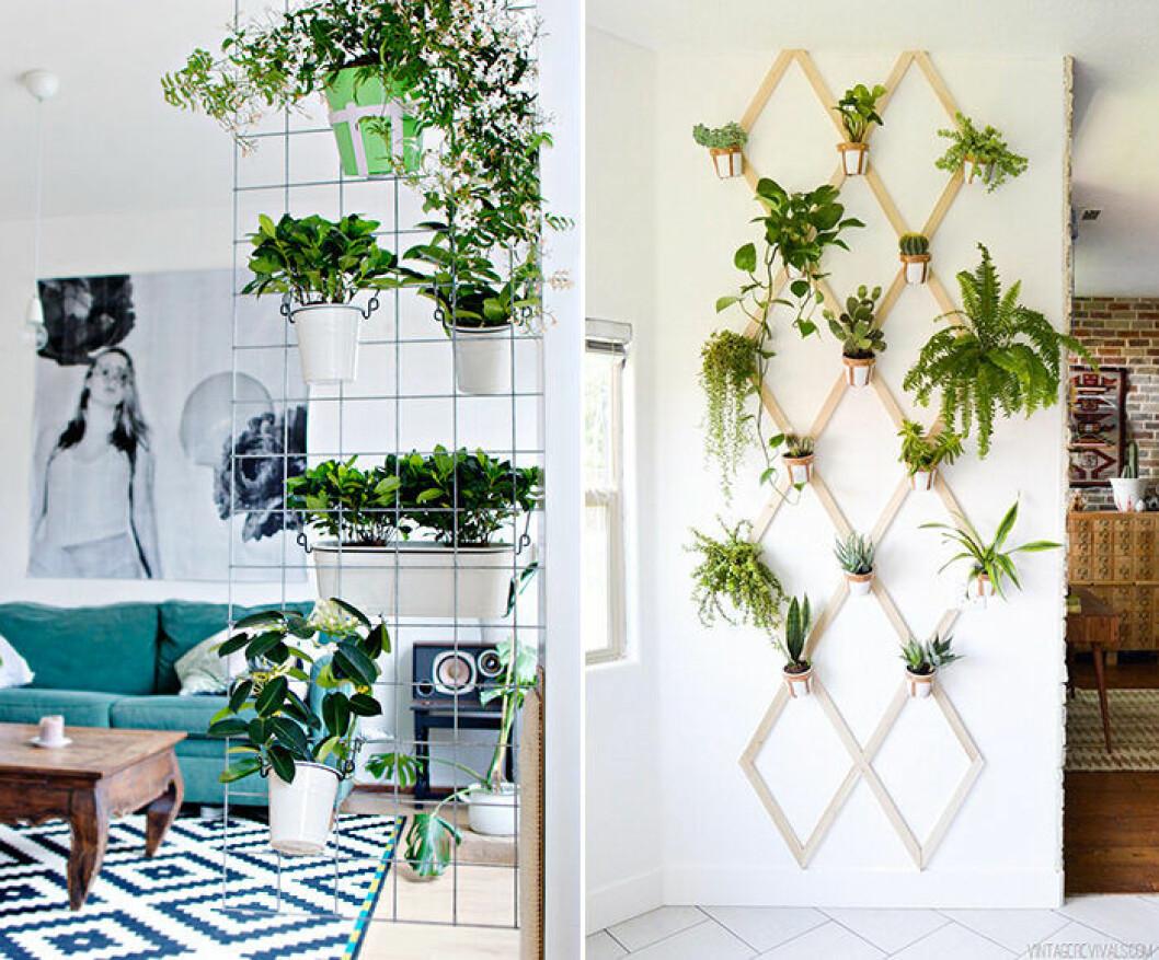 Växter från golv till tak – en av inredningstrenderna 2019 på Pinterest