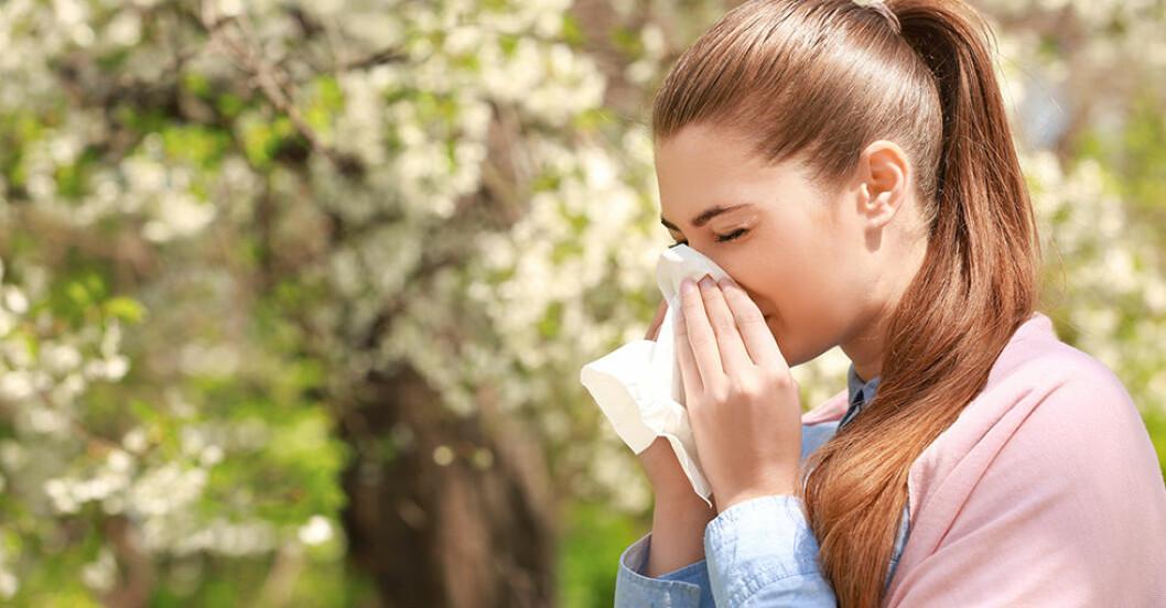 pollenallergi rekord 2019