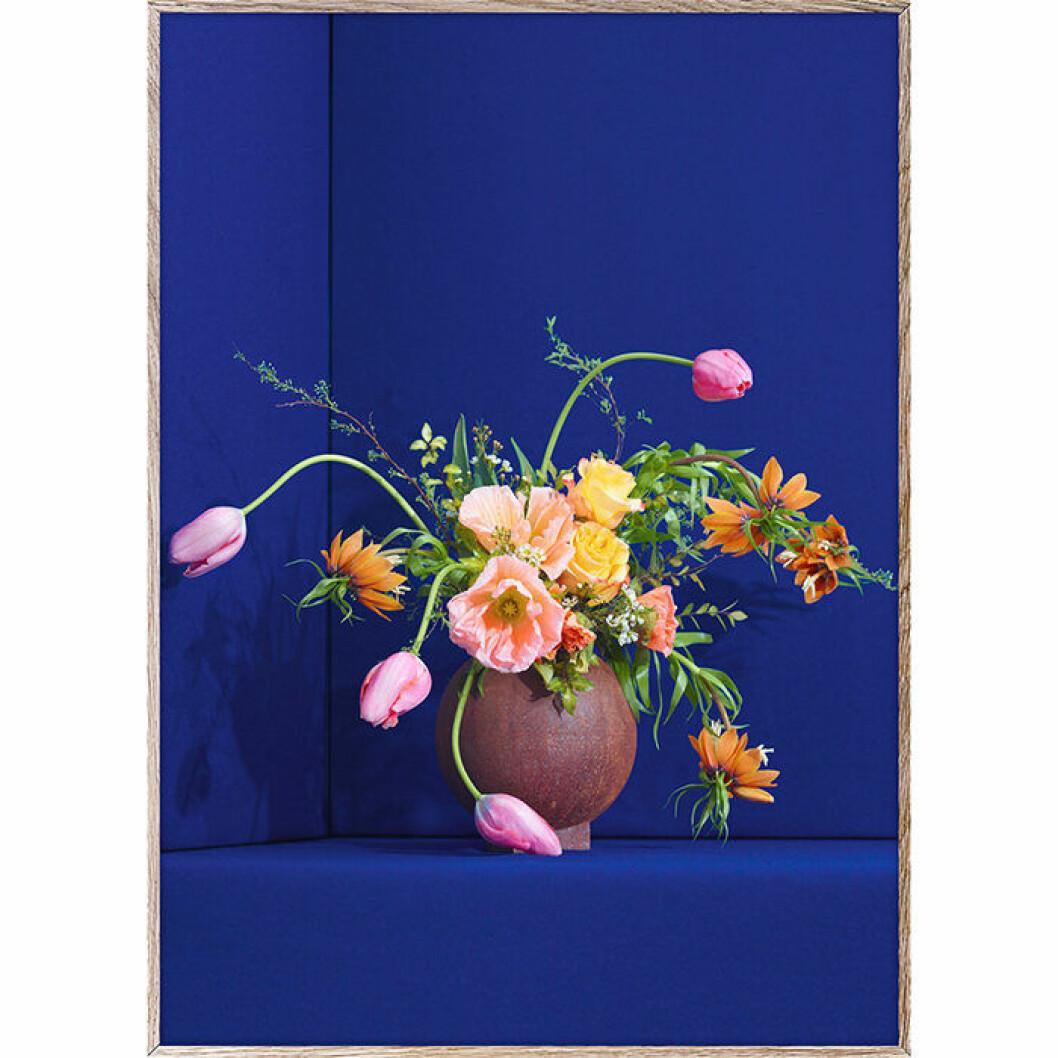 Poster med blommor mot koboltblå bakgrund