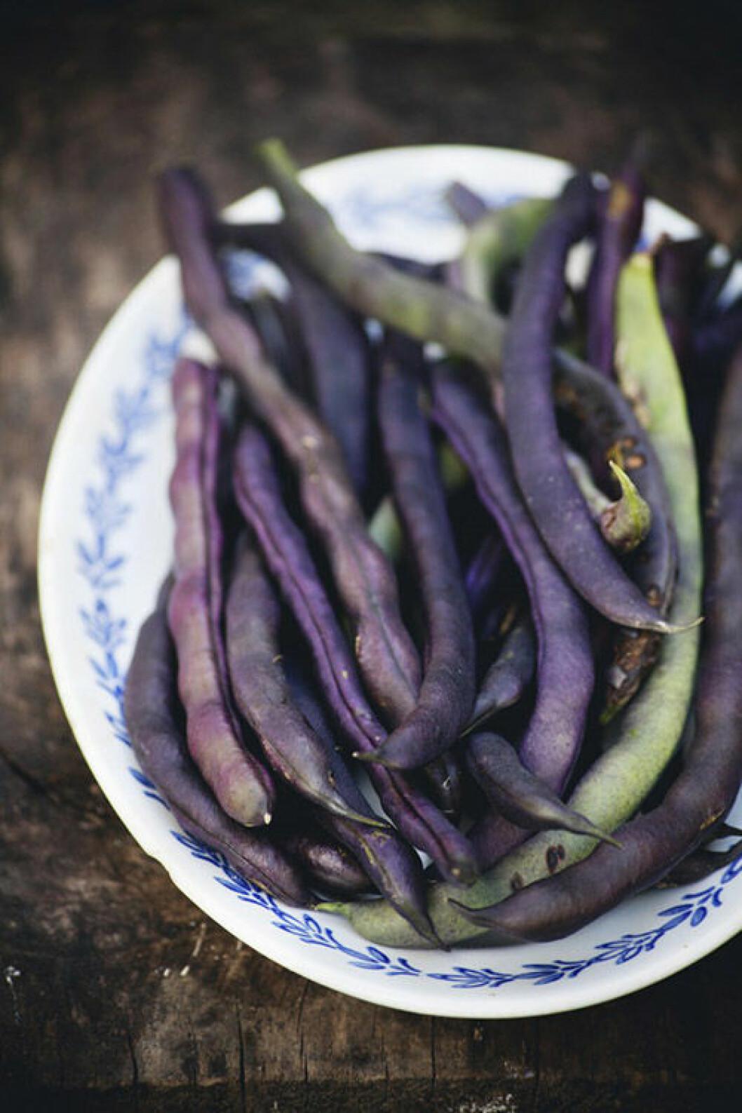 Odla enkla köksväxter som alla kan ha i sin trädgård.