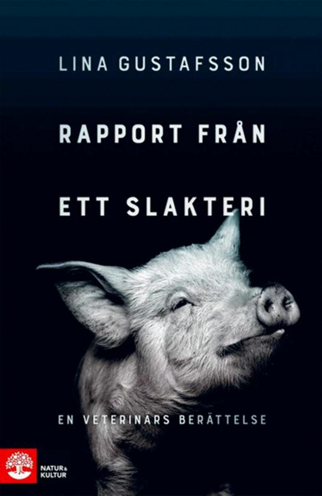 Bokomslag till Rapport från ett slakteri, en svartvit bild på en gris.
